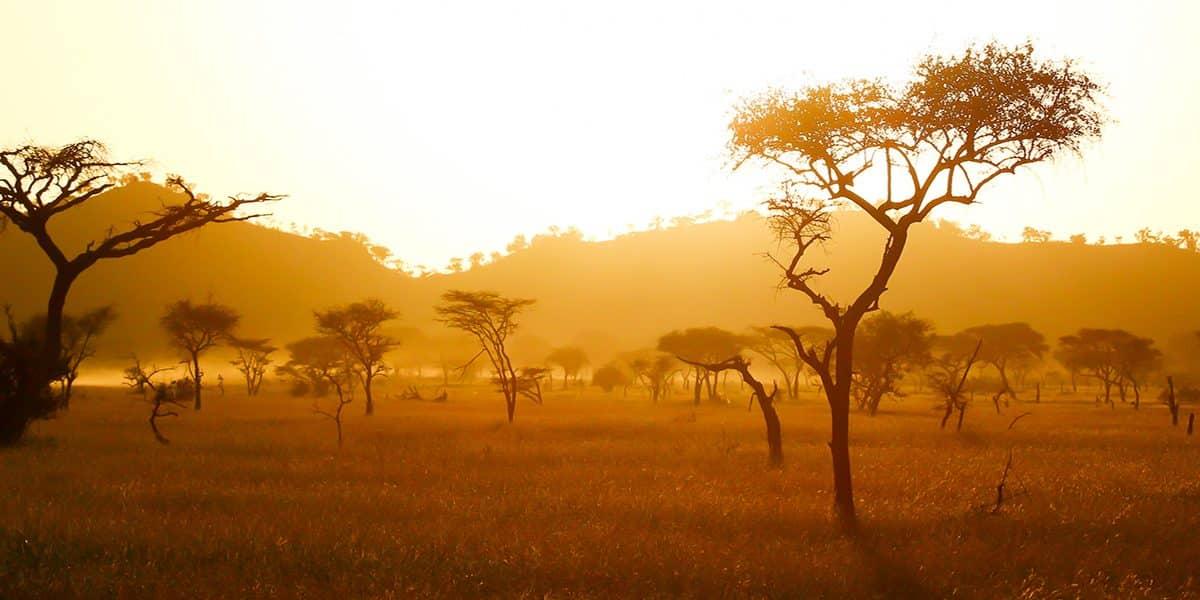 Où aller en Afrique?